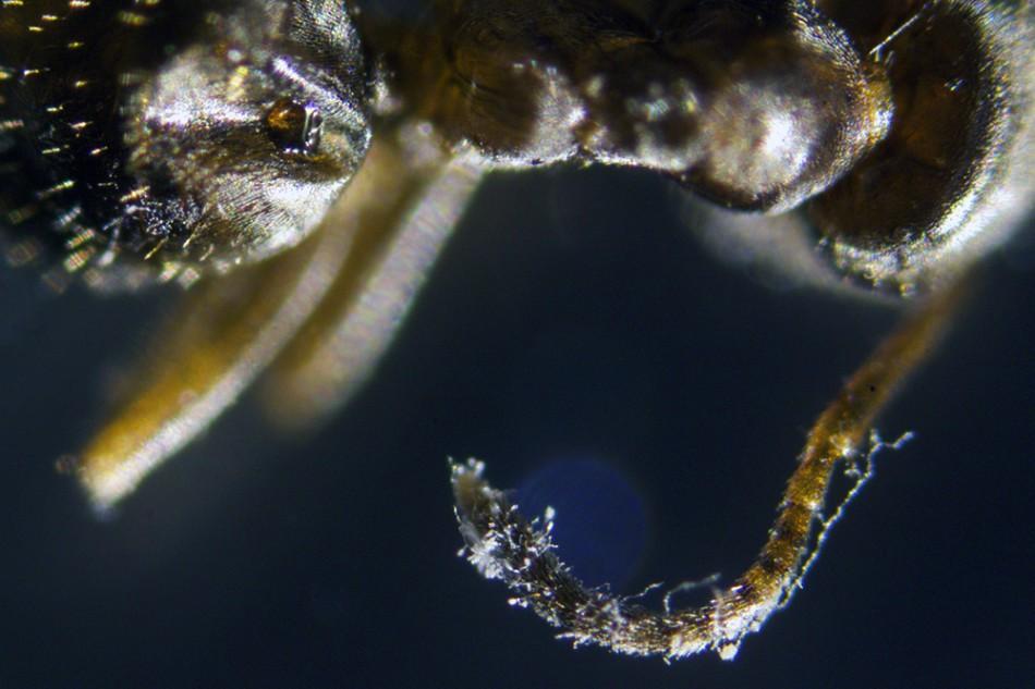 Ant_1178