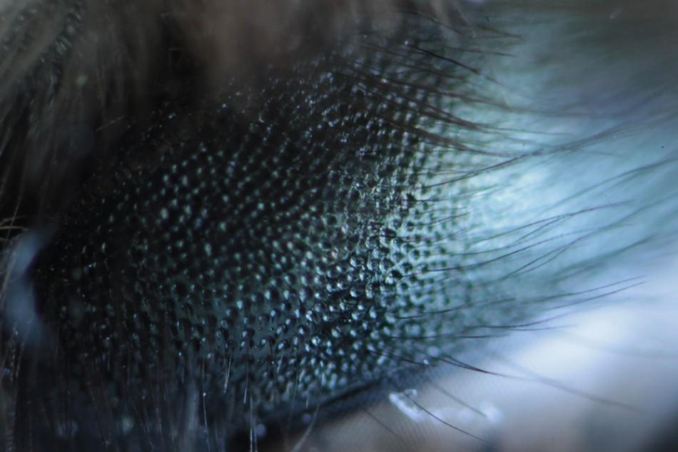 Bee Eye_2961